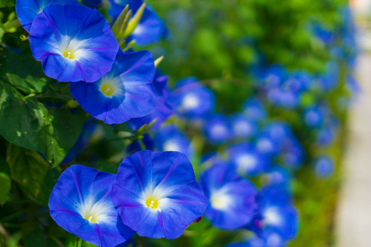 Flower Head Fragility Freshness Plant Part Sunlight Growth Close-up Day No People Outdoors Nature Green Color Purple Flower Blue Plant Beauty In Nature Leaf