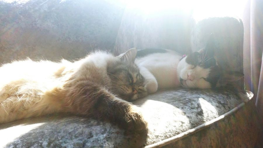No People Sunlight Day Cats Cats Of EyeEm Ultimatechill Friends Friendship Catlovers Cat Photography Sunny Sunny Day