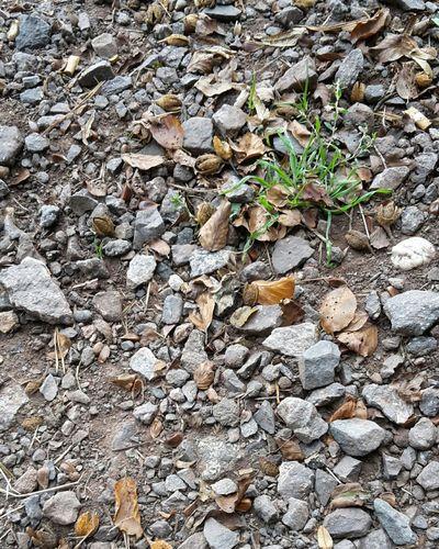 Steinchen Gras  Stones Vegetation Wachstum Ground Boden