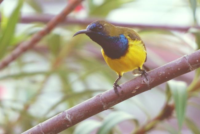 Day Close-up Bird Animal Wildlife One Animal Animals In The Wild Branch Perching No People Nature Beak Outdoors Beauty In Nature Tree Animal Themes Sunbirds Small Feathers Of A Bird