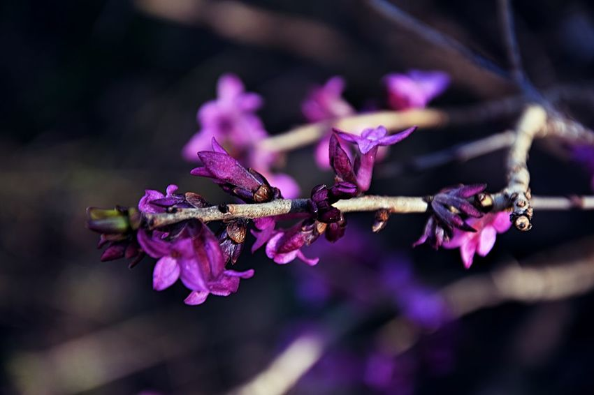 Botany Flower Flowering Plant Fragility Growth Nature Outdoors Plant Purple EyeEmNewHere