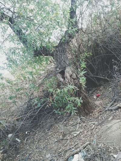 Kick It Spot Nature Trees
