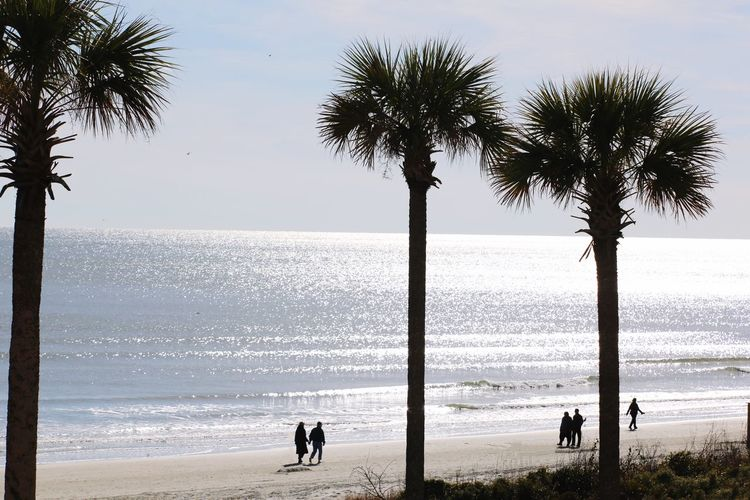 Winter walk on the beach. JGLowe Sea Beach Palm Tree Water Horizon Over Water Beauty In Nature Nature Scenics Silhouette Tree Tranquility Tree Trunk Sand Wave Outdoors Vacations Sky Real People Day