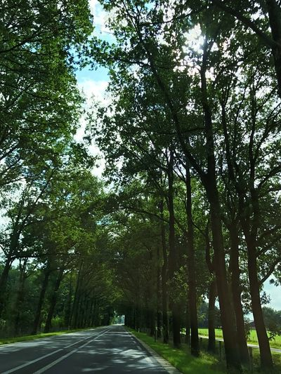 Tree Road Street Nature The Way Forward Growth Outdoors Tranquility Day Sky No People Beauty In Nature