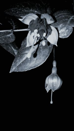 Black And White Flor