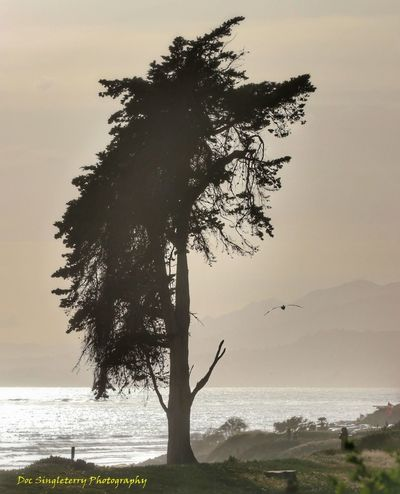Dusk Sets On Carpinteria Bluffs Tree Sea Outdoors Nature Silhouette Landscape Sunset Tranquility Beauty In Nature Dramatic Pelican Bird Ocean Coastline Pacific Ocean Bluff Scenics Beauty Coastal Landscape Southern California The Great Outdoors - 2017 EyeEm Awards