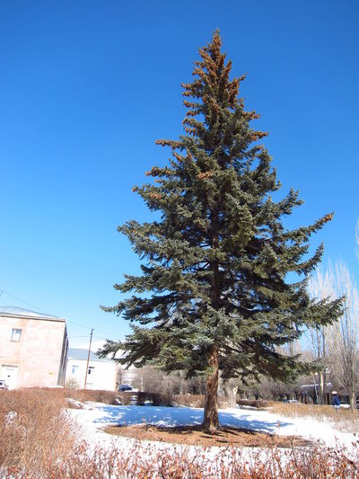 Tree Sevan, Armenia Sky Snow ❄ EyeEm February City Day New Photographer Cold Temperature Welcome To Sevan