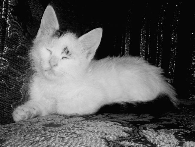 من اجمل القطط