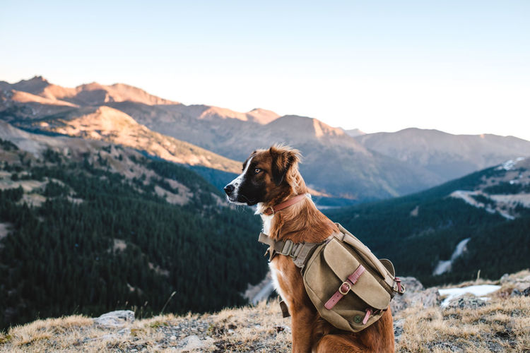 Dog looking at mountain range against sky