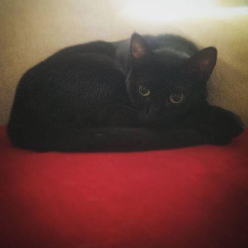 Allison'dan hepinize iyi Pazarlar.. Gaziosmanpasa Siyahkedi Istanbul Sahiplen Blackcats Adoptme Catstanbul
