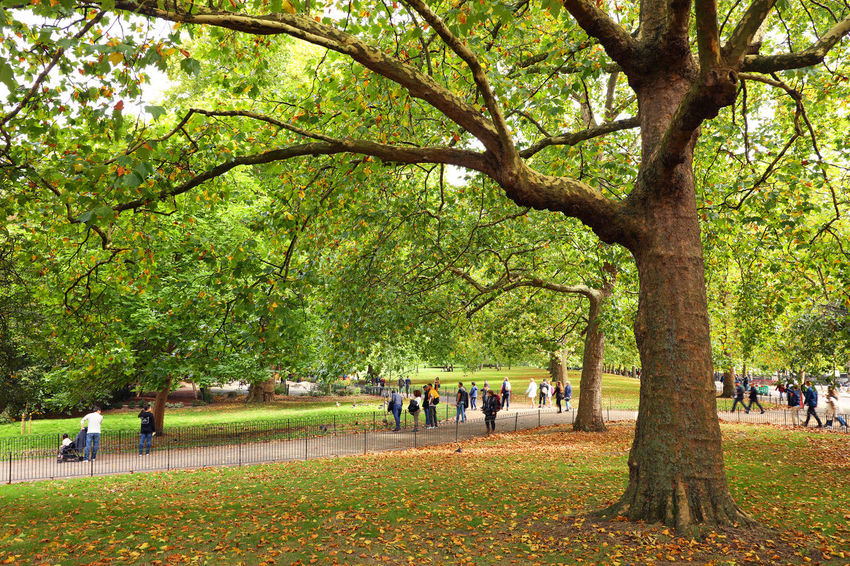 Hyde Park London Walking Around Nature LONDON❤ London Nature Nature Photography Travel Travel Photography Alley Hyde Park Landmark Nature_collection Park Travel Destinations