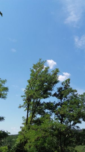 Tree Tree Area Blue Forest Branch Sky Green Color Cloud - Sky