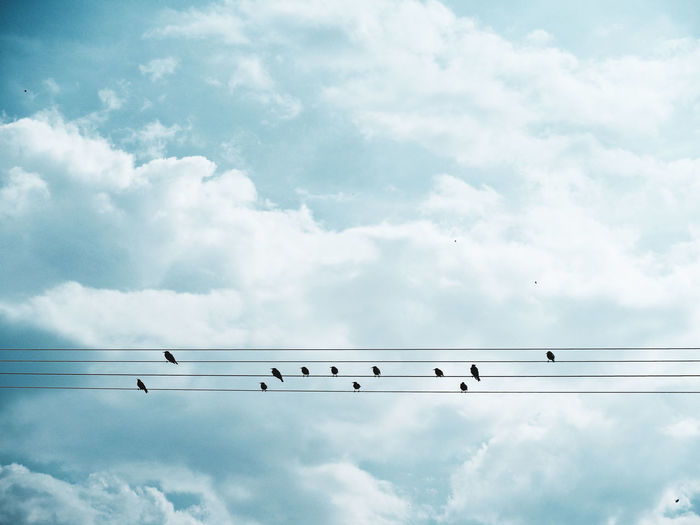 Low angle view of birds perching on cables
