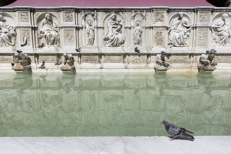 View of birds on statue of water