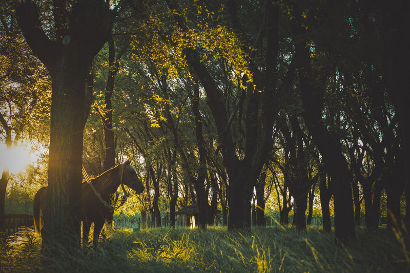 Horse by tree in forest
