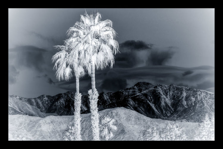 Motion No People Nature Outdoors Day Water Tree Close-up Freshness Sky Palm Desert, CA Negative Space Negative Effect