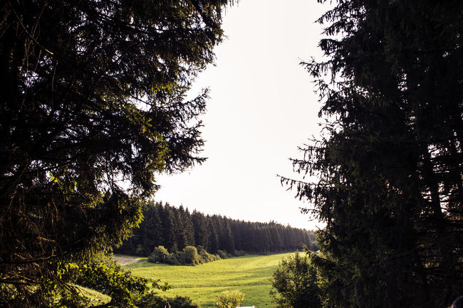 Window in the nature EyeEmEyeEmNewHereVscocam Vsco [a:1335496] Forest Landscape Nature No People Scenics Tree NewToEyeEm Outdoors