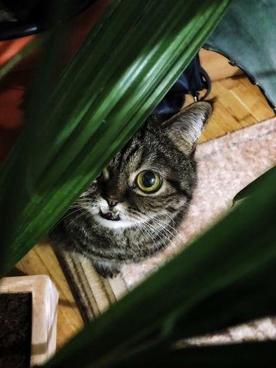 Cat Animal Wildlife Feline Domestic Cat Domestic Animals Pets Day Nature Bird Reptile Close-up