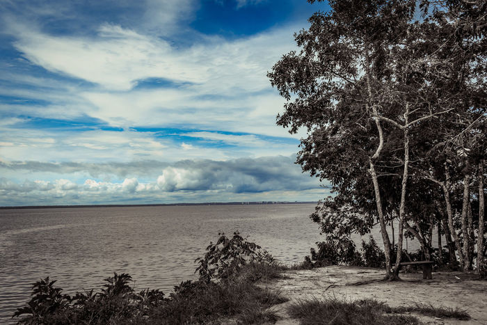 River Black&Blue Amazon Beauty In Nature Cloud - Sky Day Horizon Over Water Nature No People Outdoors Paricatuba Rio Negro River Scenics Sky Tranquil Scene Tranquility Tree Water