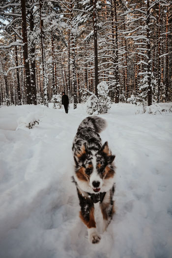 Dog in snow covered field