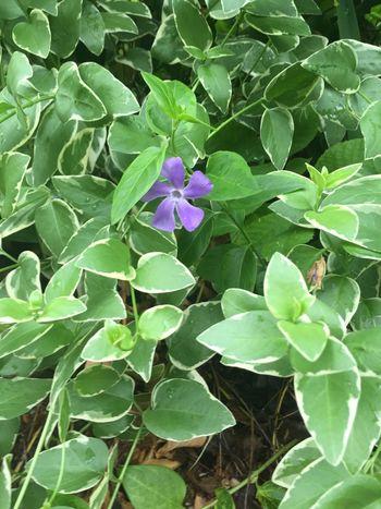 Purple Flower Overgrown Nature Leaves