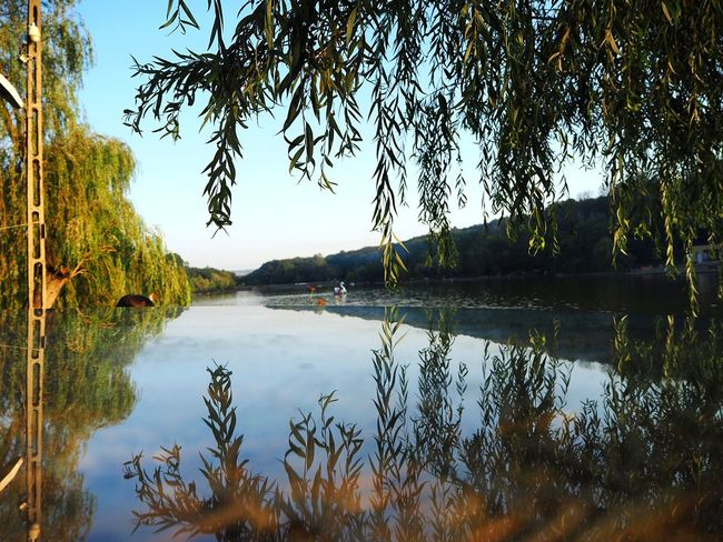 Reflection Tree Water Lake Landscape Vacations Outdoors Nature Scenics Tree Area Beauty In Nature Willow Tree Glass - Material Glass Table Top Glass Reflection Glass Reflected The Refracted Tree Reflection  Lake View Lake Landscape EyeEmNewHere The Week On EyeEm Lost In The Landscape