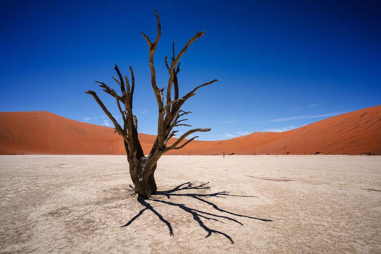 Bare tree against blue sky at desert