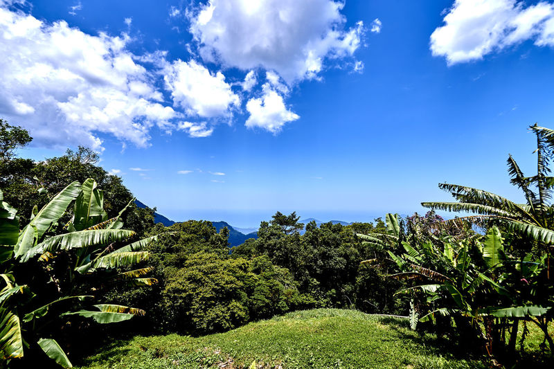 Nature Serra Do Mar Sky And Clouds Beauty In Nature Blue Blue Sky And Clouds Cloud - Sky Day Forest Growth Nature No People Outdoors Plant Rain Forest Scenics Sea Sky Sunlight Tranquil Scene Tranquility Tree Ubatuba