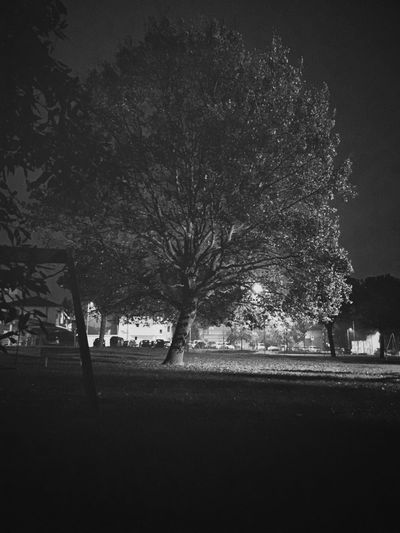 Adapted To The City Tree Nature No People Tranquility Park Outdoors Blackandwhite Night Rimini Mula
