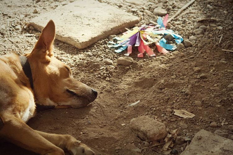 Jango Sleeping...😆 Animallovers Dogoftheday Dog Love Animalsmood EyeEm Animal Lover Animal Love Rural Scenes Thane , India