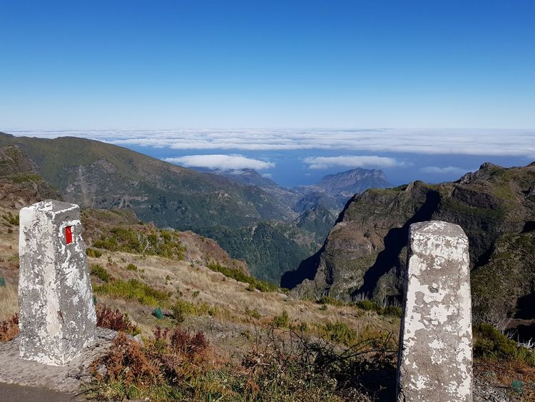 Rock Formation Fog Fern Photography Bildfolge Landscape_Collection Landscape_photography Madeira Island Portugal Road Limit Blue Color Mountain Mountain Range Scenics No People Pinaceae Nature Landscape Pine Tree Day Outdoors Mountain Peak Travel Destinations Beauty In Nature Vacations Sky Tree