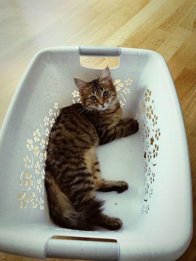 Love Pets MyFavorite  Catsofinstagram Catslover EyeEm Selects Pets Mammal Cat Domestic Domestic Cat Domestic Animals
