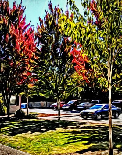 Parking Lot Tree_collection  Showcase July Beauty Around Me