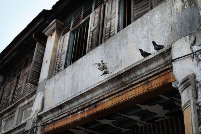 Penang Pre War House #beautiful #georgetown #heritage #penang #penang Herritage# #prewar #Textures