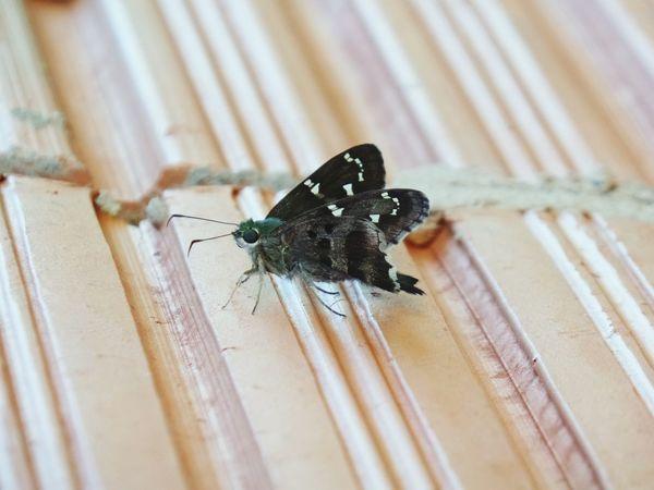 Borboletas Butterfly ❤