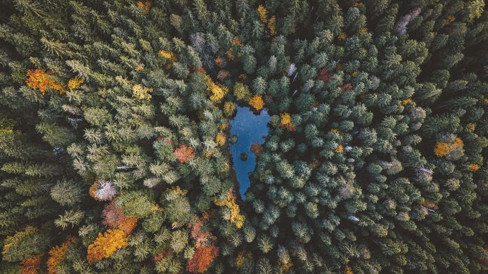 Directly above shot of trees at forest