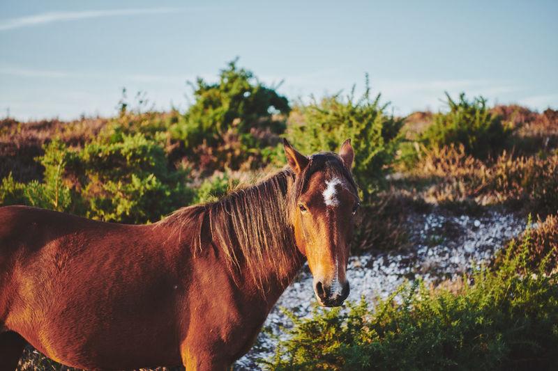 Horse in a farm