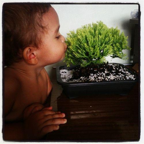 Beijando a nova linda da mamãe! Bonsai Thuya Bernardo Beijodob ê beijinho
