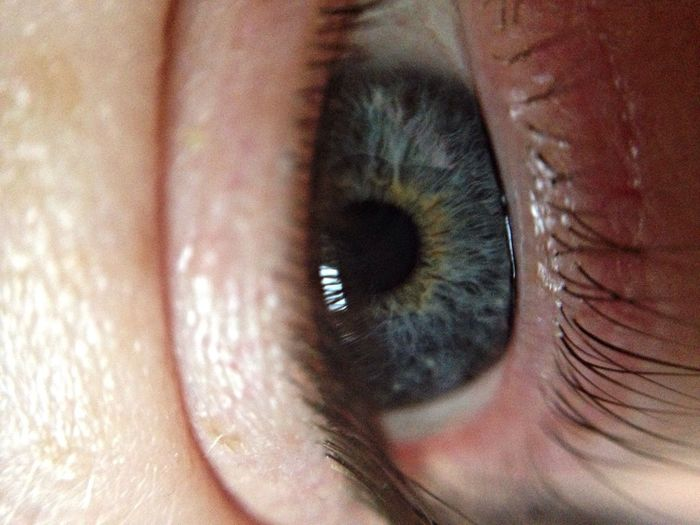 macro. Macro_collection Eye4photography  Closeup IPhoneography