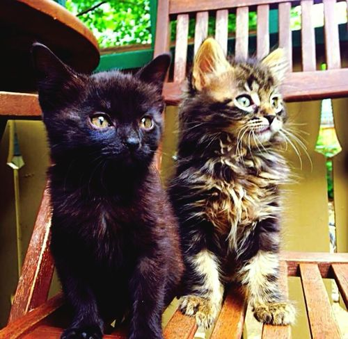Domestic Cat Pets Domestic Animals Animal Themes Togetherness Kittenlovers Kitten Photography Kitten Love Kittens Portrait Outdoors Beauty Friendship
