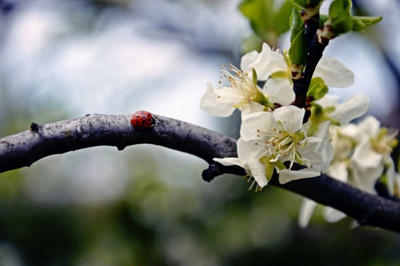 Marco Enjoying Life Beauty In Nature Beauttiful Ogrodek Pasja Macro Beauty Summer Apple Tree Green Ladybug