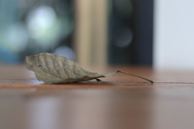 Bokeh Cafe Close-up Day Horizontal Indoors  Insect No People Table