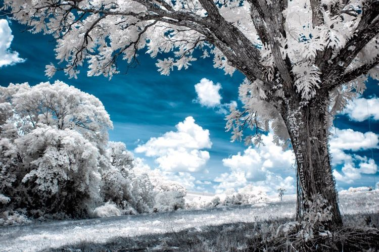 Infrared photo Infrared Color Infraredphotography Infrared Infrared Photo Infrared Photography Infrared Camera