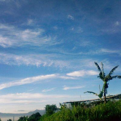 Skyline AmateurPhotograph Aozora Art Photograph sky Summer Sunshine GreenField landscape_captures landscape Nature 1.3 mp trying to be a Photographer Passion Pray Chance Come_true