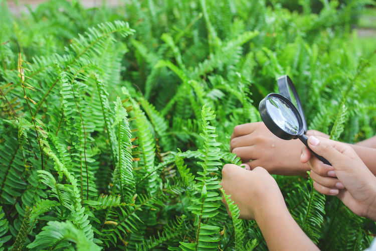 Cropped image of hands holding magnifying glasses over plants