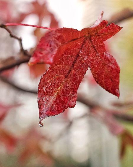 Details of maple leaf