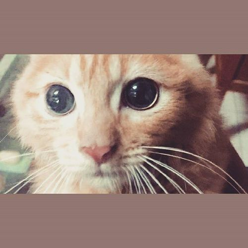 Ur soul is.. Eye Cat Cute Pets Evilcats Petsofinstagram Petstagram Evil Pet