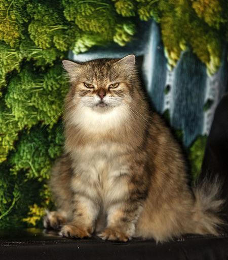 Cat sitting against plants