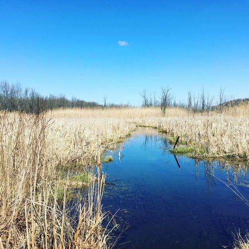 Narrow Stream Along Countryside Landscape