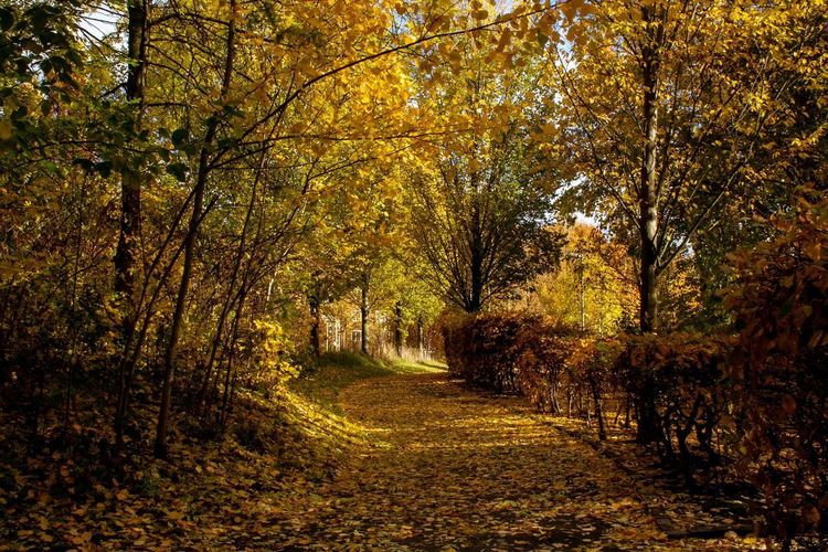 Autumn Colour Tree Plant Autumn Beauty In Nature Growth Nature Tranquility Change No People Scenics - Nature The Way Forward Land Direction Tranquil Scene Outdoors Sunlight Footpath Day Non-urban Scene Forest
